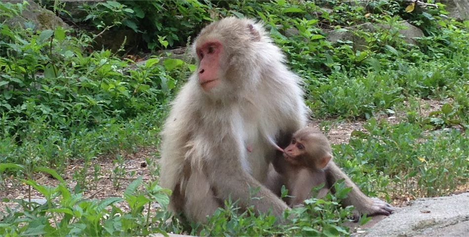 What is a good season to visit the snow monkeys?